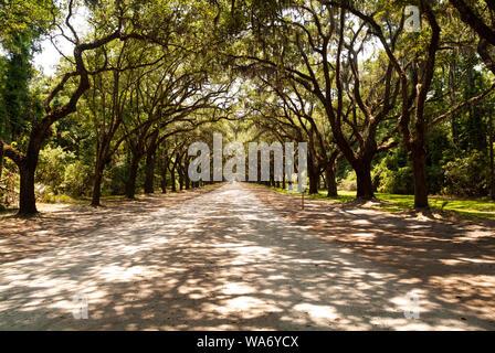 La pintoresca carretera bordeada de más de cuatrocientos robles vivos que cuelgan sobre la avenida Oak conducen a la derecha al sitio histórico de Wormsloe y a la plantación
