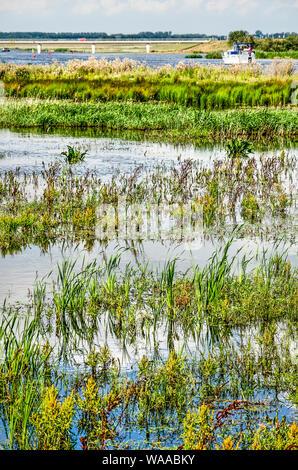 Los pastos y otra vegetación que crece en aguas poco profundas en el fondo de un pequeño yate en canal Reevediep cerca de Kampen, Países Bajos, enfoque
