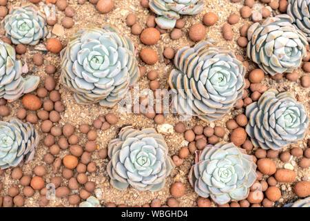 Vista superior diversos tipos hermosos cactus suculentas en el jardín.
