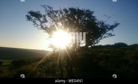 Árbol retroiluminado en el campo Foto de stock
