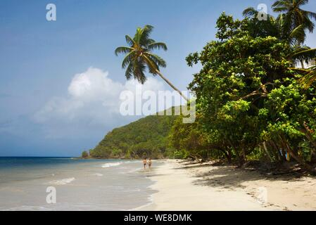 Colombia, la isla de Providencia, par de caminar en la playa de Manzanillo revestidos con altos cocoteros y bañada por el Mar Caribe
