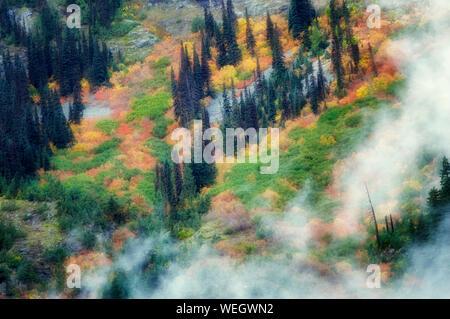 Color en el otoño y nubes bajas. Parque Nacional Cascadas del Norte. Washington