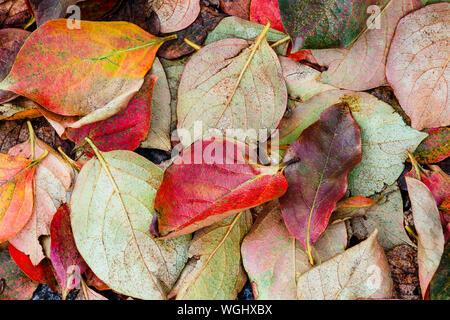 Vista superior en color caído hojas de otoño