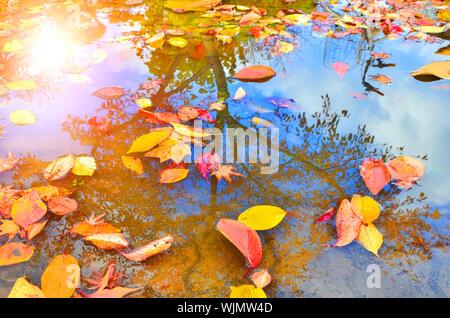 Hojas de otoño flotando en el charco con el reflejo de los árboles y el cielo