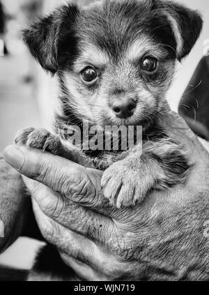 Close-up de Hombre sujetando Puppy