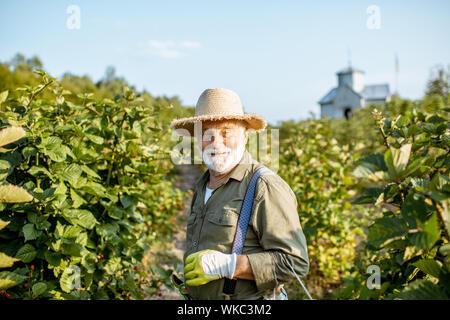 Retrato de un hombre bien vestido senior como jardinero recoger moras en la hermosa finca durante la soleada tarde