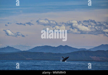 Ballenas nadando en el mar contra el cielo