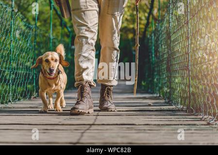 Excursionista con small yellow dog caminar sobre puentes colgantes de madera en el bosque