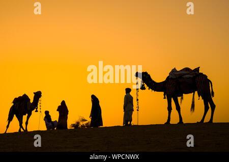 Jaisalmer, Rajasthan, India - abril 18th, 2018: indian cameleers (conductores de camello) con siluetas de camellos en las dunas del desierto de Thar en Sunset.