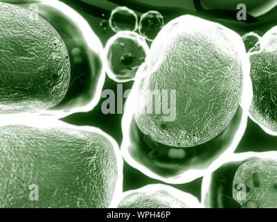 Grupo de células vivas en un microscopio de alta calidad 3D Render de celdas, campo de células, la estructura de la molécula, la estructura celular, la división de hu