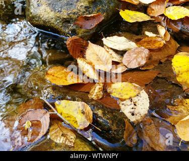 Un alto ángulo de visualización de hojas flotando en el charco