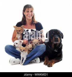 Mujer joven con siete chihuahuas y una rottweiler delante de un fondo blanco