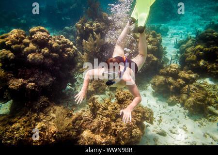Buceador buceo a lo largo de la coral cerebro