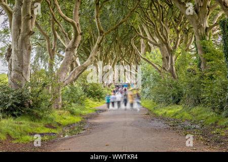 La larga exposición de Dark Hedges, Ballymoney, Irlanda del Norte