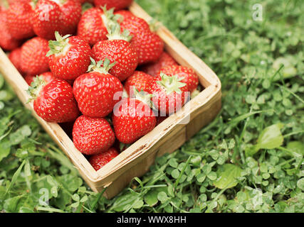 Las fresas maduras frescas en una pequeña caja de madera.