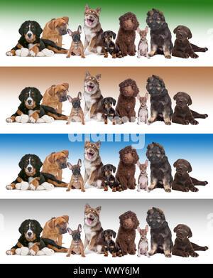 Gran grupo de cachorros delante de diversos fondos de gradiente