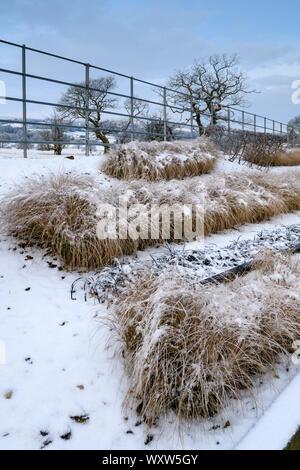 Frontera herbácea con elegante diseño contemporáneo (pastos en líneas) - cerca de la esquina del jardín de invierno cubierto de nieve - Yorkshire, Inglaterra, Reino Unido.