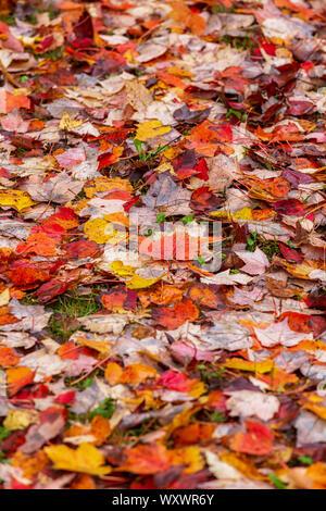 Hojas de otoño caídos en el suelo del bosque.