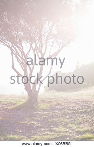 Árbol que crece en el campo Foto de stock