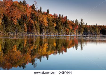 Un Otoño Reflexión de amarillo, naranja y rojo deja en Algonquin Provincial Park, Ontario, Canadá