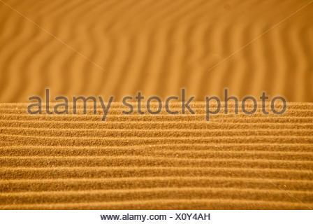 El viento sopla sobre el horizonte de arena dorada en Kelso dunas