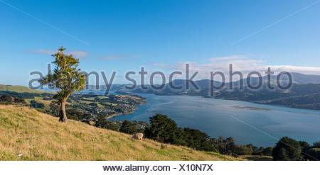El paisaje costero, puerto de Otago, Otago, Isla del Sur, Nueva Zelanda