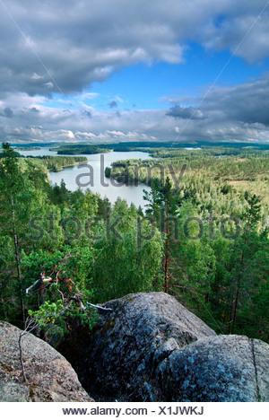 Un alto ángulo de vista de río que fluye a través del bosque