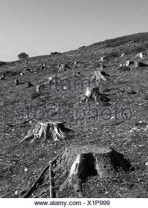 Tocones de árboles en un campo abierto Foto de stock
