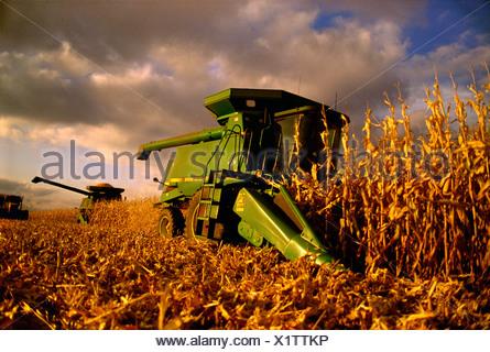 Agricultura - combina la cosecha del maíz durante un atardecer de otoño / Rock County, Wisconsin, Estados Unidos.