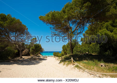 Bosque De Pinos En La Cala Guya Cala Ratjada Mallorca Baleares Espana Fotografia De Stock Alamy