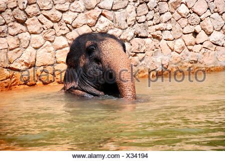 Bebé elefante en el agua