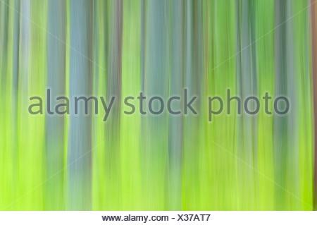 Escandinavia, Suecia, Vastergotland, vista borrosa de tronco de árbol (movimiento)