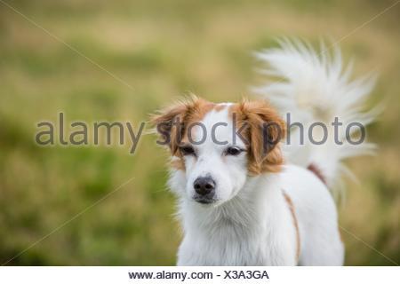 Retrato de mujer mongrel dog