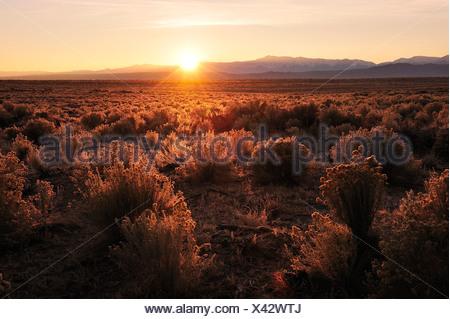 Al amanecer, cerca de Mammoth Lakes, California, USA, Estados Unidos, América, matorrales,, paisaje, Sunrise