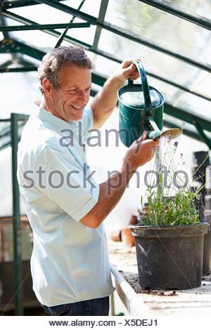 Un varón de mediana edad trabajando en invernadero