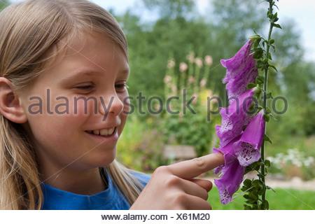 Foxglove común, púrpura digital (Digitalis purpurea), chica pegada a su dedo en una flor del foxglove común, Alemania