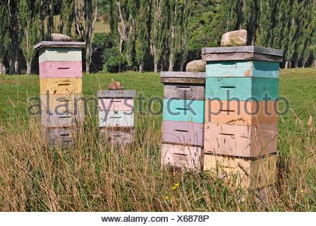 Cajas de abejas Pohara Golden bay Isla del Sur Nueva Zelanda
