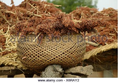 Cesta llena de mijo, Pakete, Camerún, África
