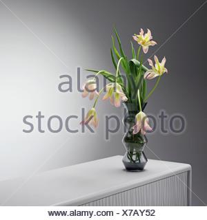 Los tulipanes en florero de vidrio, cerrar Foto de stock
