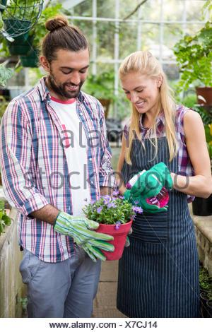 Feliz colegas rociado de agua en la planta en macetas en invernadero