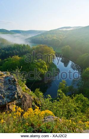 Un alto ángulo de vista de río que fluye a través del bosque, Thaya, Thayatal, Umlaufberg, Baja Austria, Austria