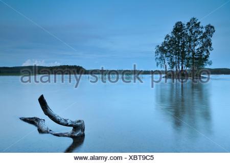 Escandinavia, Suecia, Vastergotland, tronco de árbol en el lago