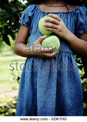 Una niña sostiene las manzanas verdes en un huerto de manzanas. Foto de stock