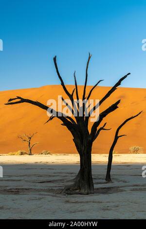 Vieux arbres morts, Deadvlei, Namib-Naukluft National Park, Sesriem, Namibie Banque D'Images