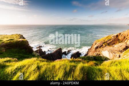 Sur les falaises du parc national de Pembrokeshire Coast au Pays de Galles, Royaume-Uni. Banque D'Images