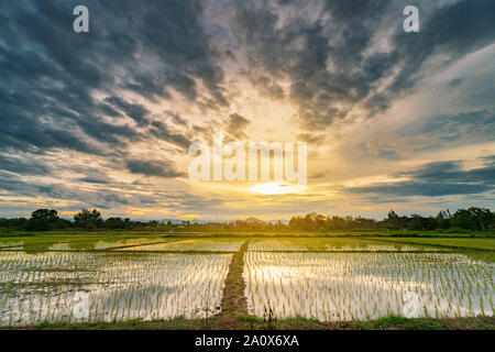 Beau terrain panoramique naturel et les nuages de tempête et terrain vert fond agricole