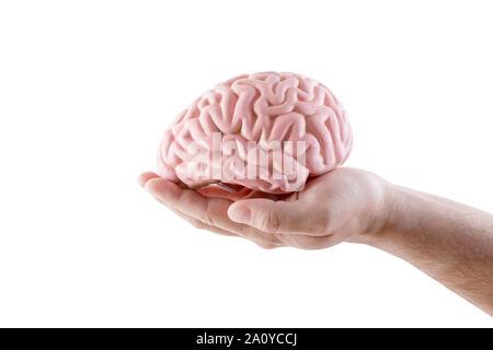 Cerveau humain en main isolé sur fond blanc Banque D'Images