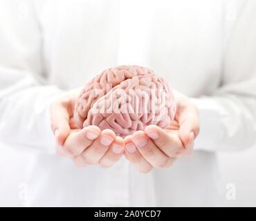 Cerveau humain dans les mains Banque D'Images