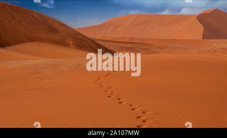 Un ensemble d'empreintes dans le sable dans les grandes dunes rouges de Sossusvlei, Désert du Namib, Namibie. Le vent souffle le sable vers le sommet de dunes. Banque D'Images