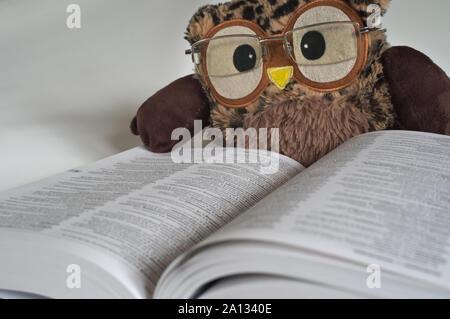 Chouette jouet avec des lunettes de lecture sur un dictionnaire 2